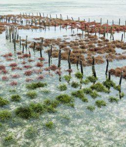 Produção de Algas na Paraíba