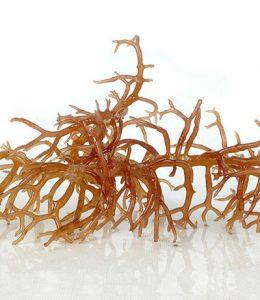 Alga Marinha Kappaphycus Kappaphycus Alvarezii (Eucheuma Cottonii)