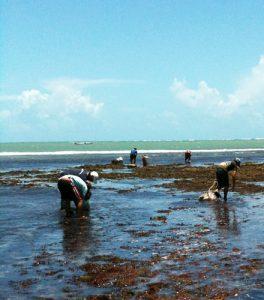 Cultura de Algas Marinhas em João Pessoa