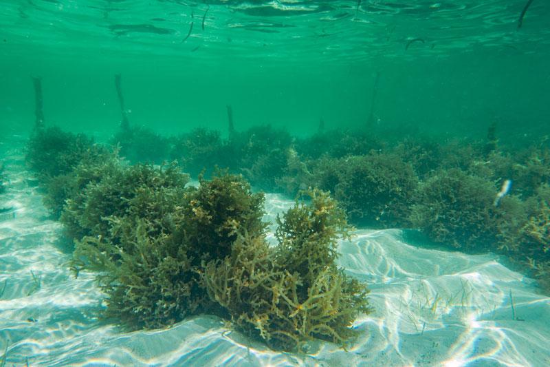 A AGAR BRASILEIRO é uma empresa brasileira de produção e desenvolvimento de algas marinhas.
