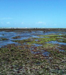 Imagem de produção de algas marinhas em praia de João Pessoa
