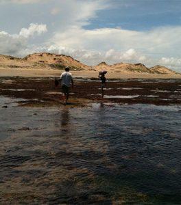 Maricultura de algas marinhas no nordeste brasileiro